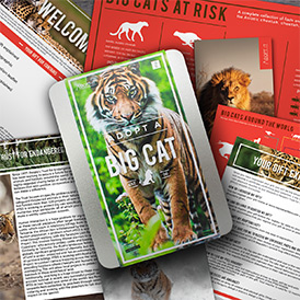 Help to save big cats