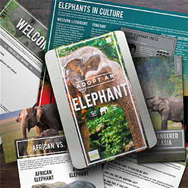 Help protect elephants