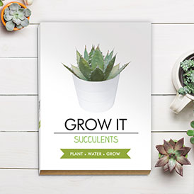 Grow It - Succulent