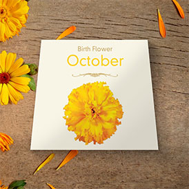 Birth Flowers - October